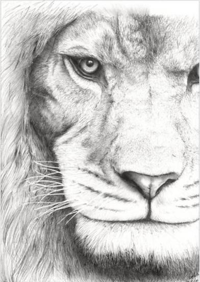 Carte Lion