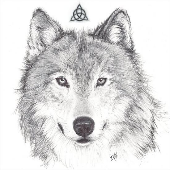 Carte Loup