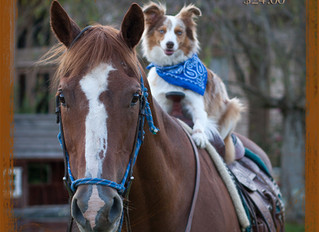 Boots, Barns & Bling - Family, Child, Pet Event