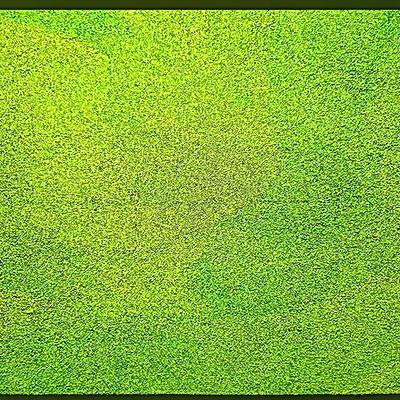 Innthong Pontawit - Green.jpg