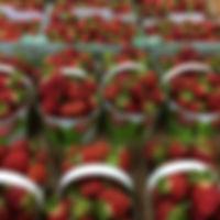 aux fruits de lacollie - fraises jewel-