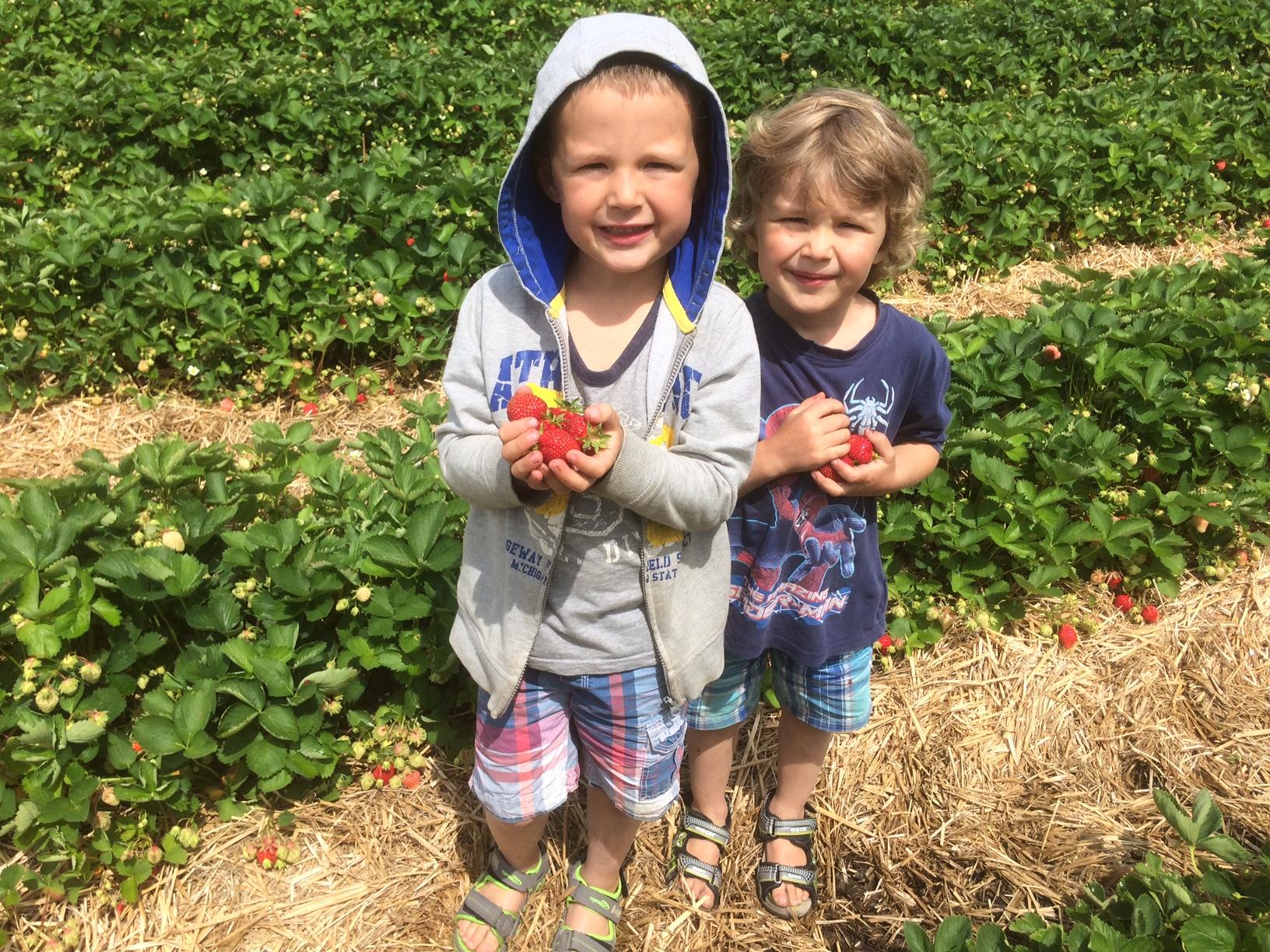jeunes aux fraises