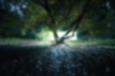 Captura de Pantalla 2020-08-07 a la(s) 1