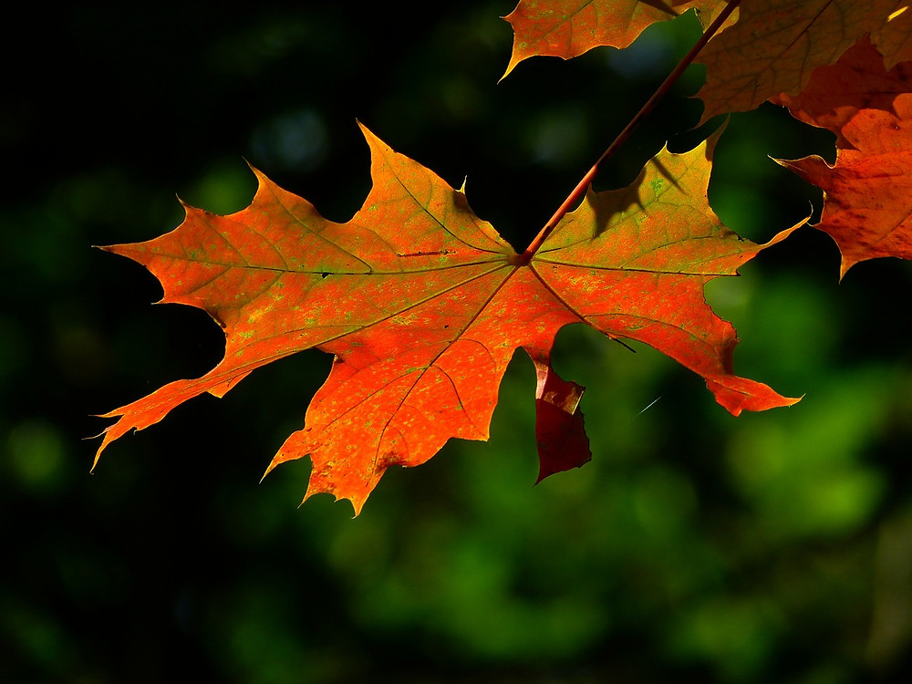 Fall leaf: Nature's Poetry of Life