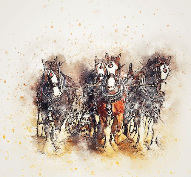 Four draft horses (drawn) coming right at you. Nature books for women and men.