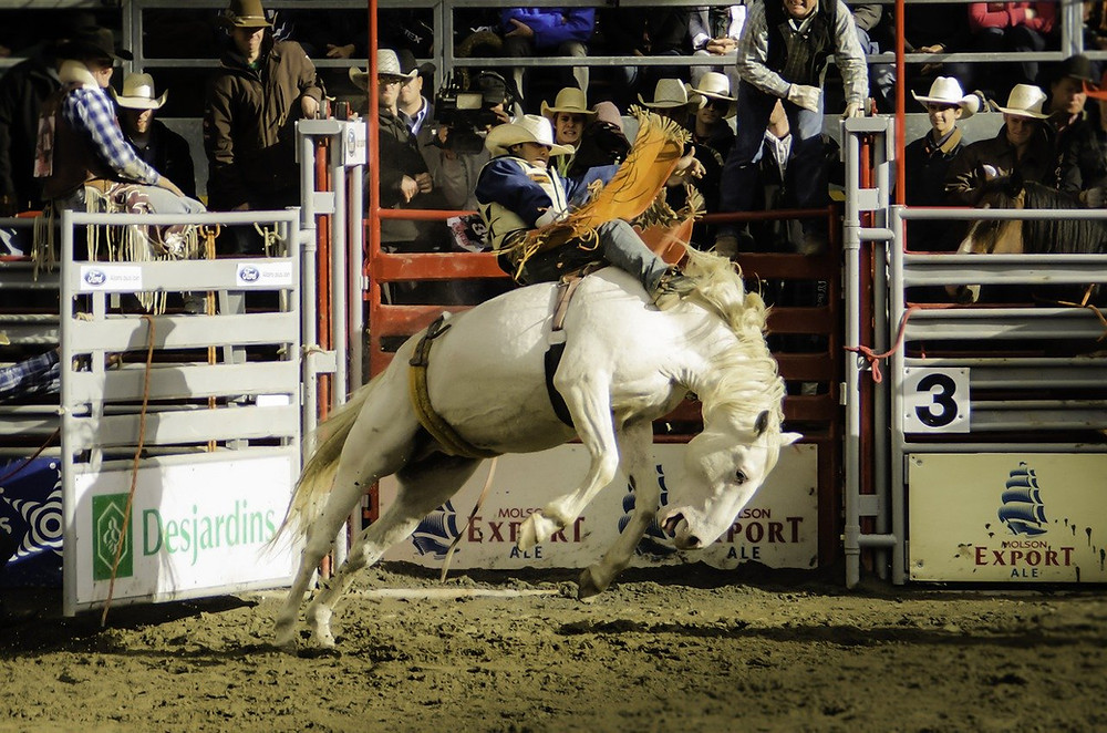 Rodeo Ride: Cowboy on white horse.