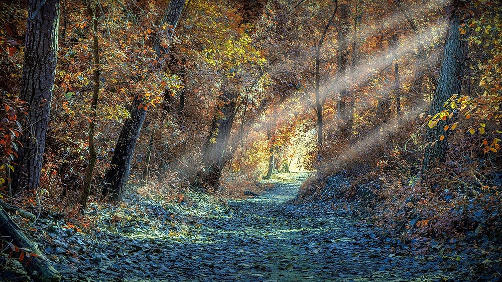 The Poetry of Life, path through woods