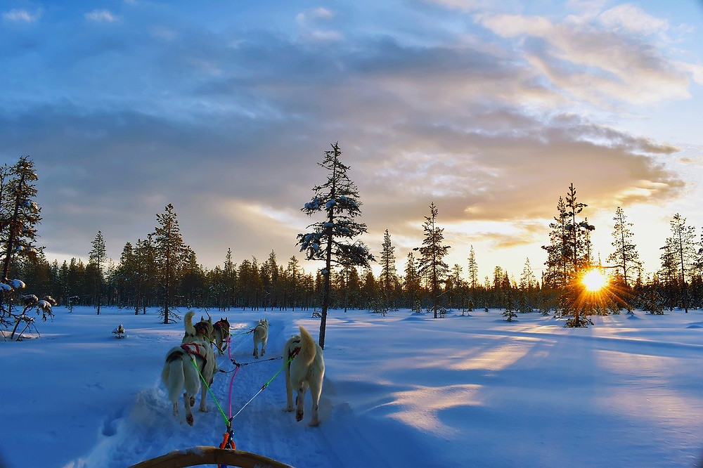 Dogs pulling sled in winter: The Poetry of Life