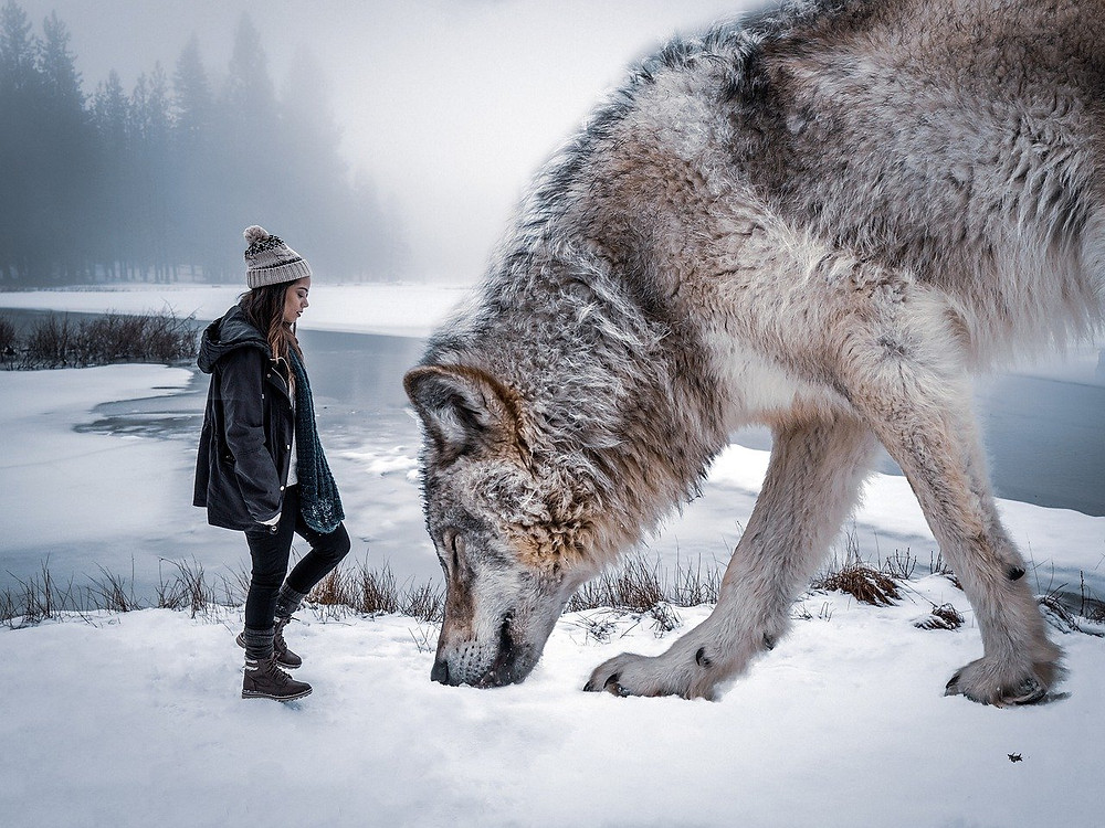 young girl, facing wolf. The Poetry of Life.