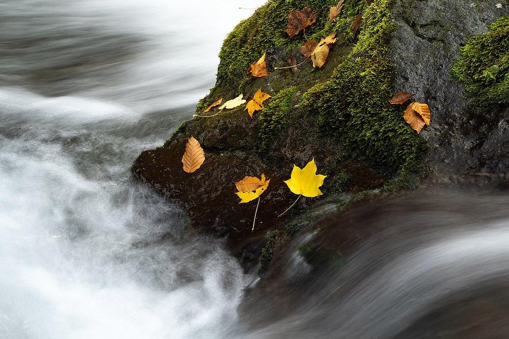 water rapids, leaves on rock