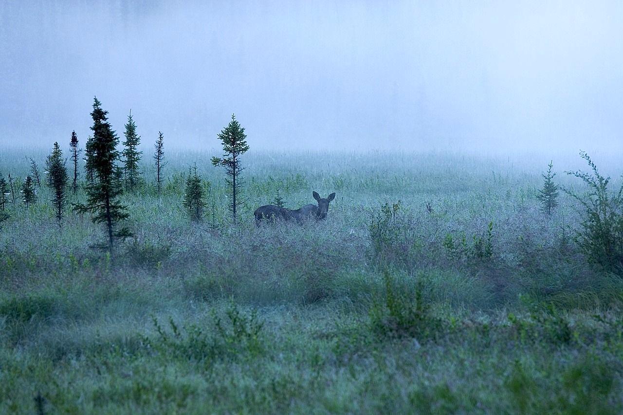 fog-710271_1280-copy-compressor_edited