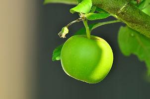 apple-1532055_1920.jpg