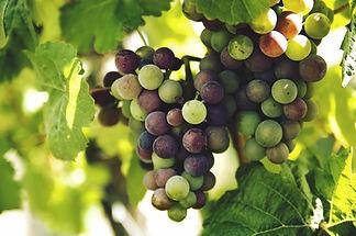 grapes-1246531_1920.jpg