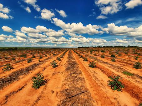FMC levará soluções completas para o manejo do eucalipto para o Show Florestal