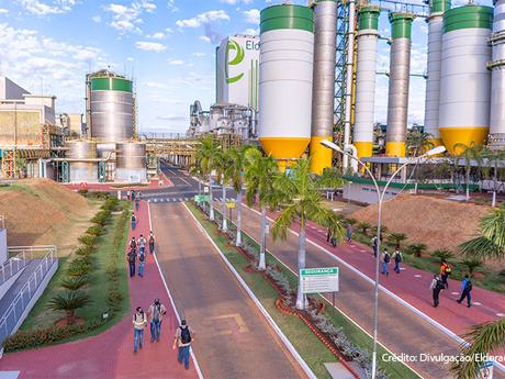 Indústria do eucalipto impacta positivamente a economia da região de Três Lagoas