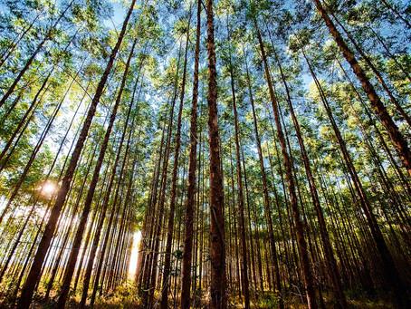 Show Florestal - A feira da Indústria do Eucalipto