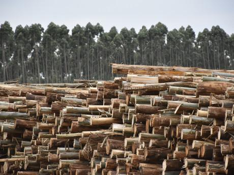 Goiás: onde há consumo há oportunidade