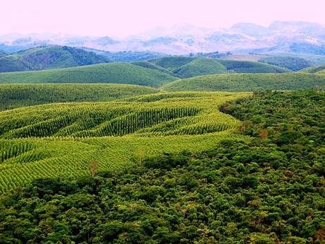 BNDES vai participar de contratos que somam 2,8 milhões de hectares