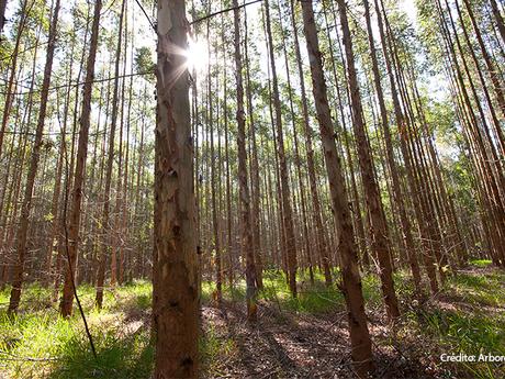 Arborgen no Show Florestal