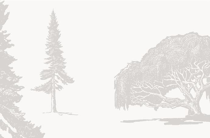 banner trees gontree.jpg
