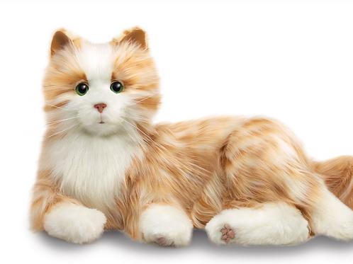 COMPANION PET CAT ORANGE