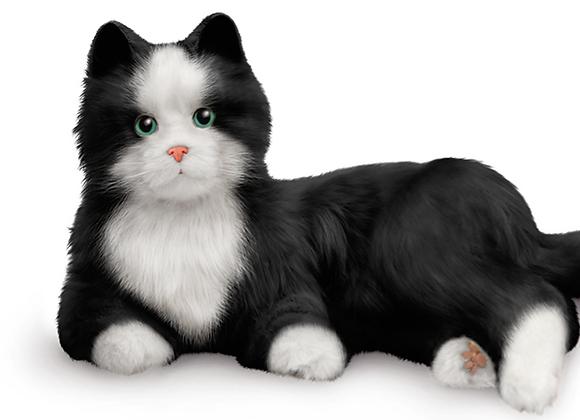 COMPANION PET CAT BLACK