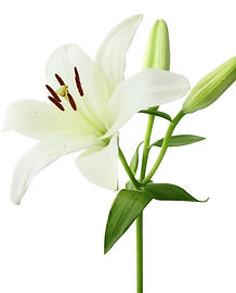 Lily_iStock_000015291850Large.jpg