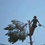 garth-topping-tree147x147.jpg
