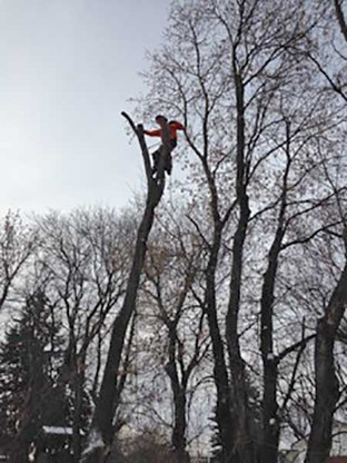 garth-at-top-of-tree.jpg