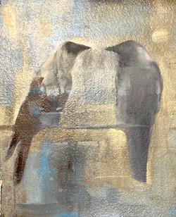Ceylon Crows
