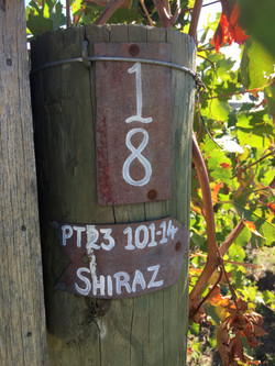 Shiraz Row Haldon Estate