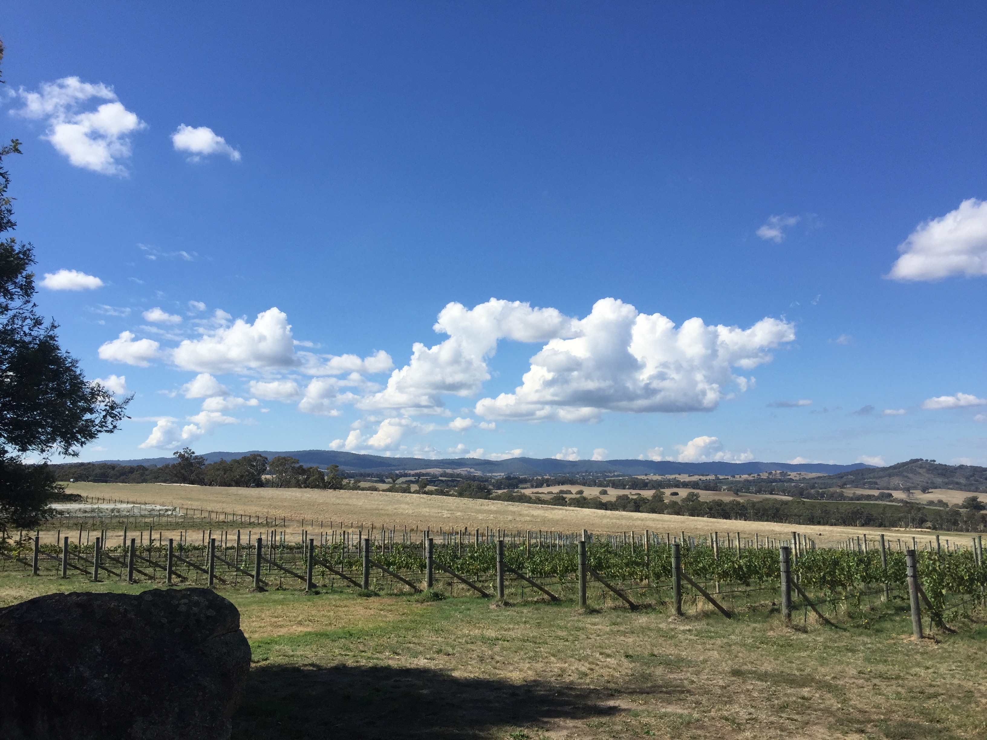 View over Castagna Vineyard