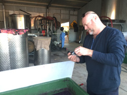 Vin Webb testing the grape