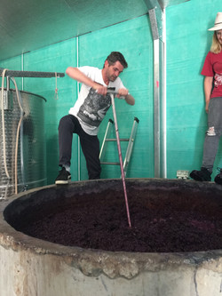Plunging Shiraz at Haldon Estate Win