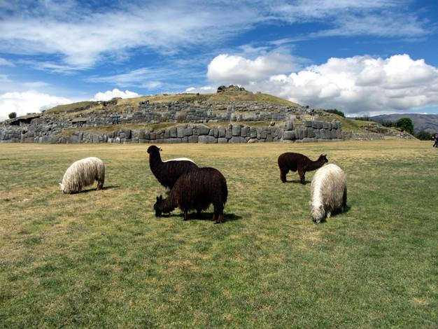 Sacsayhuaman, Cuzco