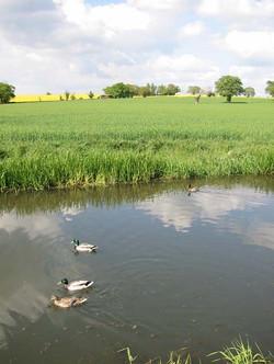 022 ducks