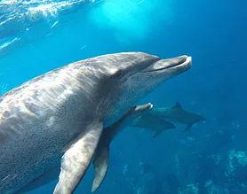 イルカの泳いでる写真
