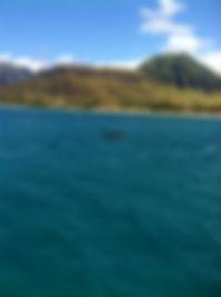 dolphinswim02.jpg