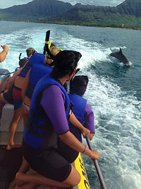 dolphinswim03.jpg