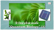 Quantum Biology (2) - ใบไม้โซลาร์เซลล์