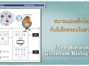 Quantum Biology (3) - เข็มทิศควอนตัมกับตานก