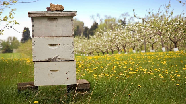 Friends Of The Bee - Hive in Orchard.jpg
