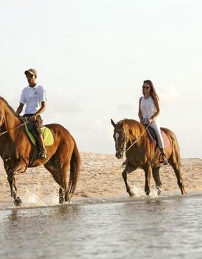 horses Mauritius