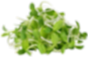 the_nutrition_clinic_broccoli_singapore.
