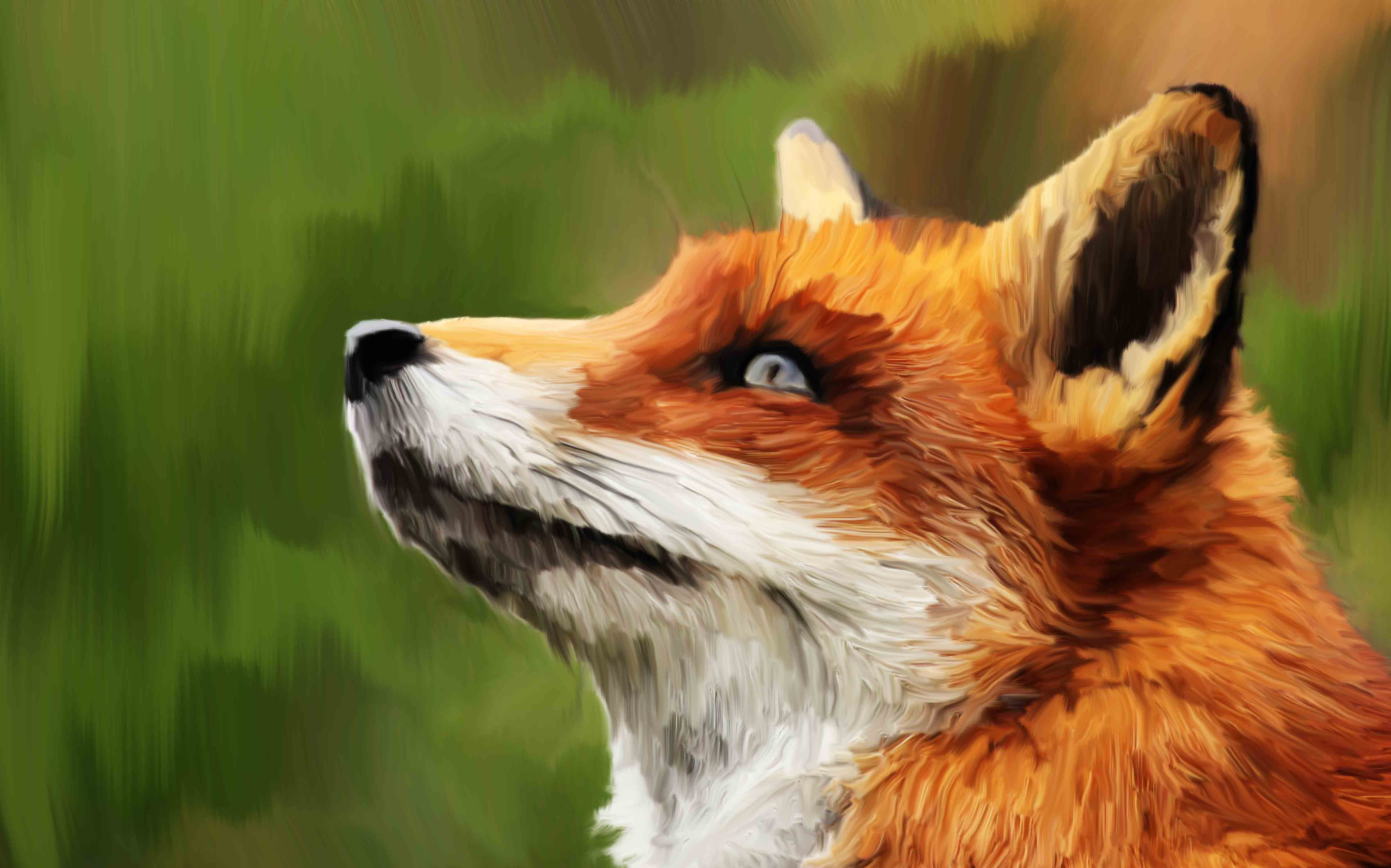 Fox '15-'16