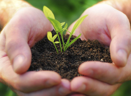 10 Ways to Reduce Your Carbon Footprint