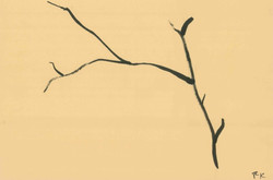 Branches Study (4) - India Ink