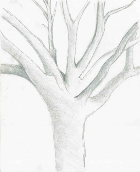 Tree Branches - Graphite