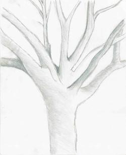 Tree Branches - Graphite