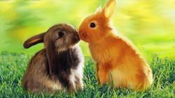 cute_rabbits'15-'16